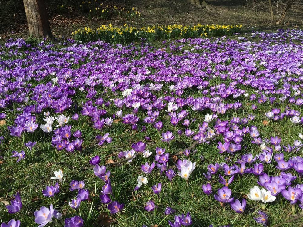Frühling mitten in Augsburg